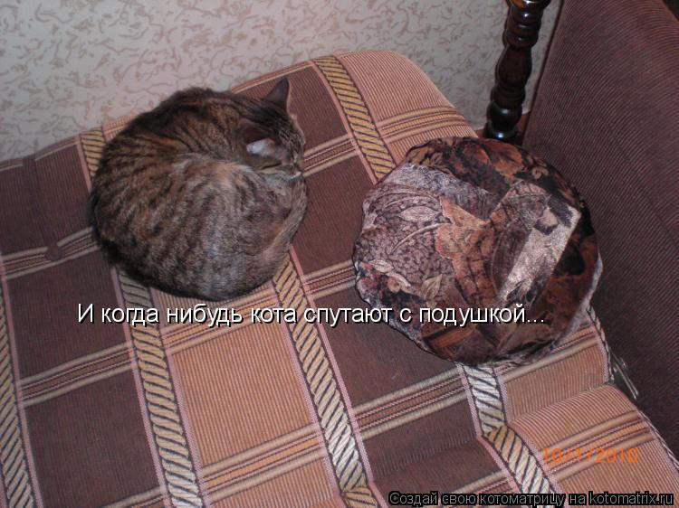 Котоматрица: И когда нибудь кота спутают с подушкой...