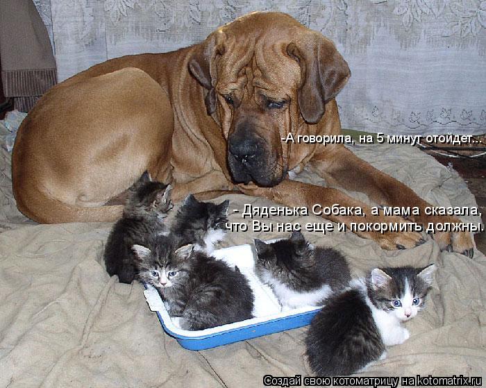 Котоматрица: - Дяденька Собака, а мама сказала,  что Вы нас еще и покормить должны... -А говорила, на 5 минут отойдет...