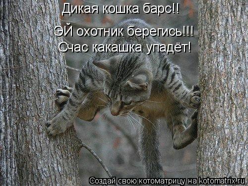 Котоматрица: Дикая кошка барс!! ЭЙ охотник берегись!!! Счас какашка упадёт!