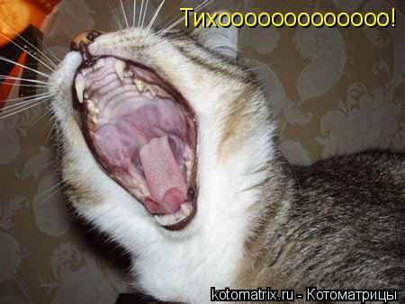 Котоматрица: Тихооооооооооооо!