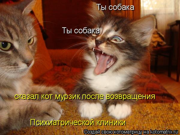 Котоматрица: Ты собака Ты собака сказал кот мурзик после возвращения Психиатрической клиники