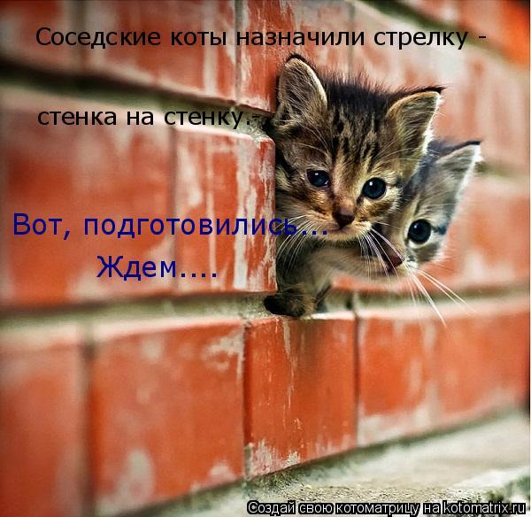 Котоматрица: Соседские коты назначили стрелку -  стенка на стенку.-  Вот, подготовились... Ждем....