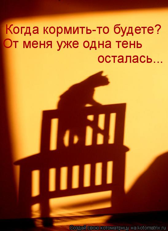 Котоматрица: Когда кормить-то будете? От меня уже одна тень осталась...