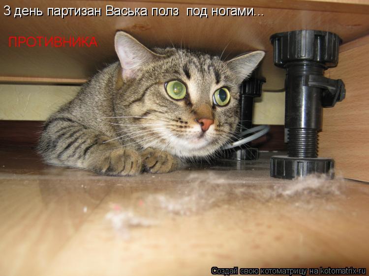 Котоматрица: 3 день партизан Васька полз  под ногами... ПРОТИВНИКА
