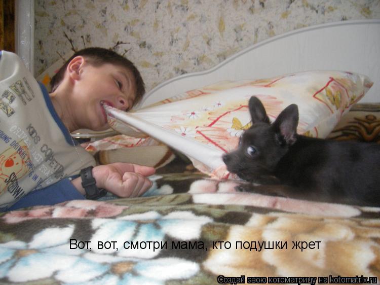Котоматрица: Вот, вот, смотри мама, кто подушки жрет
