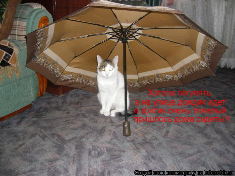 Котоматрица: Хотела погулять,  а на улице дождик идет а зонтик очень тяжелый пришлось дома сидеть!!!