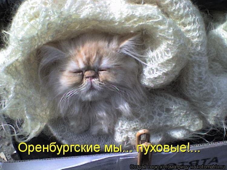 Котоматрица: Оренбургские мы... пуховые!...