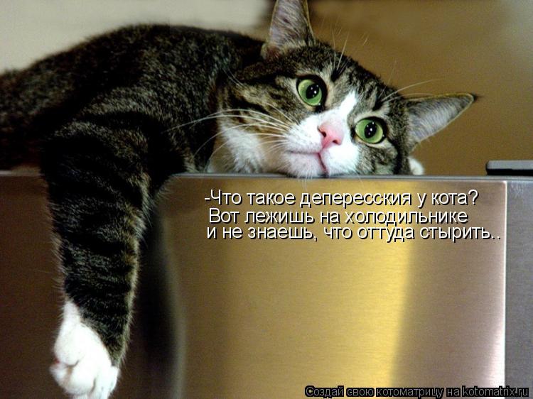 Котоматрица: -Что такое депересския у кота? Вот лежишь на холодильнике  и не знаешь, что оттуда стырить..