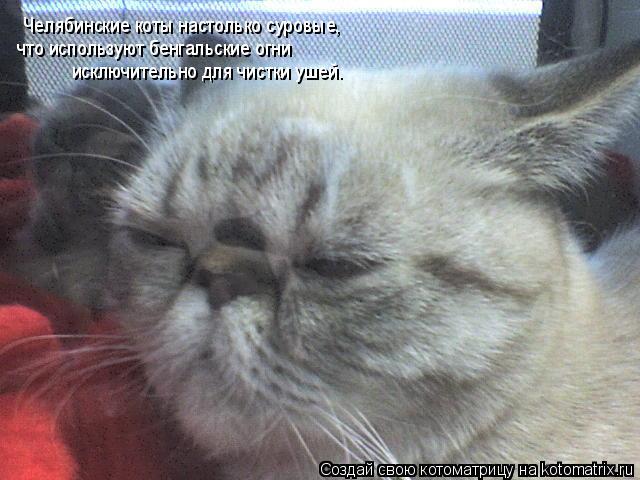 Котоматрица: Челябинские коты настолько суровые, что используют бенгальские огни исключительно для чистки ушей.