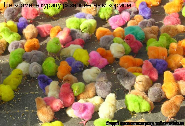 Котоматрица: Не кормите курицу разноцветным кормом!