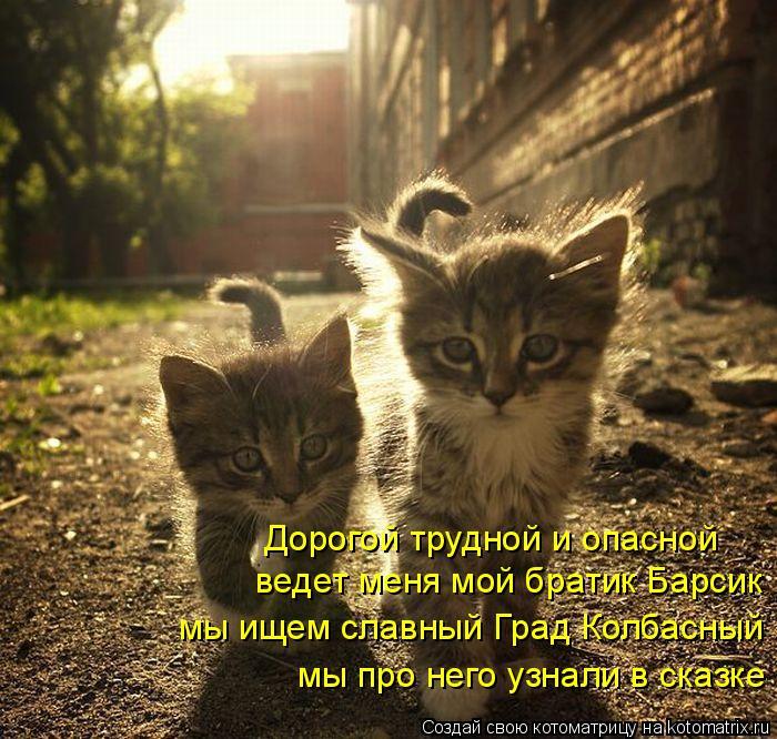 Котоматрица: ведет меня мой братик Барсик мы ищем славный Град Колбасный мы про него узнали в сказке Дорогой трудной и опасной