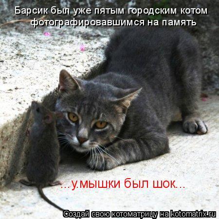 Котоматрица: Барсик был уже пятым городским котом фотографировавшимся на память ...у.мышки был шок...