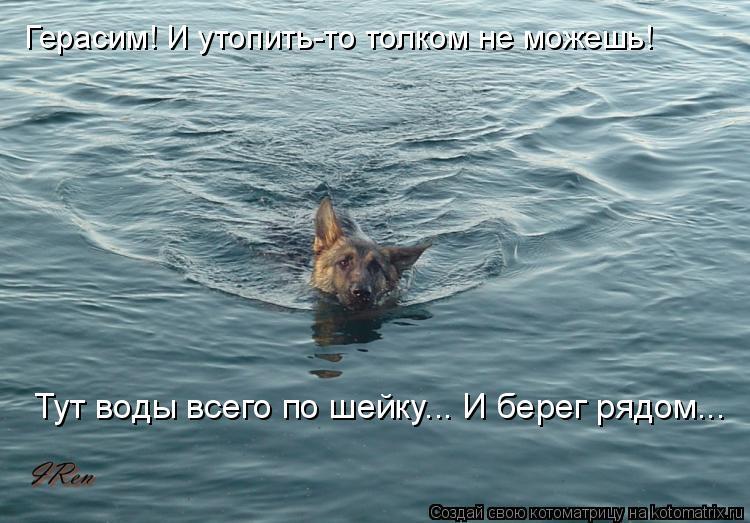 Котоматрица: Герасим! И утопить-то толком не можешь! Тут воды всего по шейку... И берег рядом...