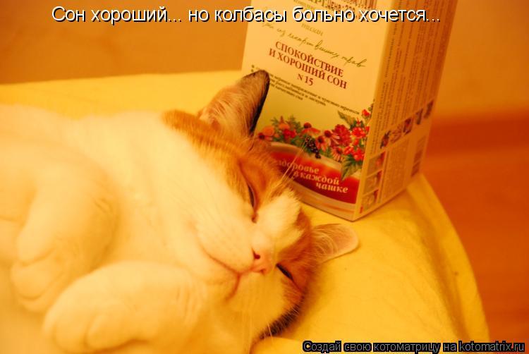 Котоматрица: Сон хороший... но колбасы больно хочется...