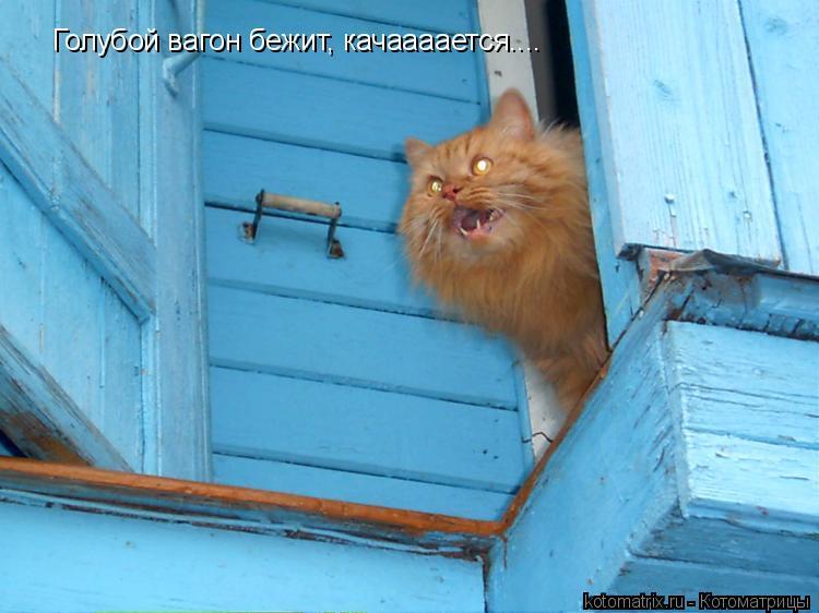 Котоматрица: Голубой вагон бежит, качаааается....