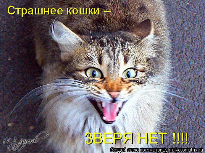 Котоматрица: ЗВЕРЯ НЕТ !!!! Страшнее кошки --