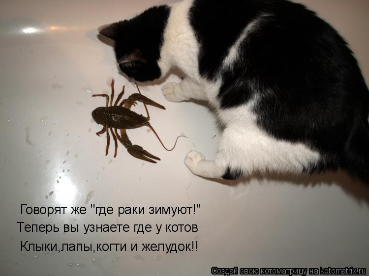 """Котоматрица: Говорят же """"где раки зимуют!"""" Теперь вы узнаете где у котов  Клыки,лапы,когти и желудок!!"""