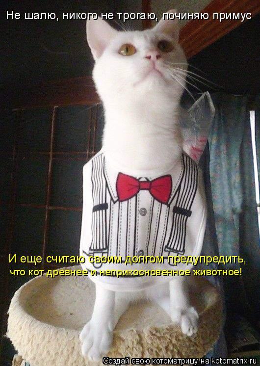 Котоматрица: Не шалю, никого не трогаю, починяю примус И еще считаю своим долгом предупредить, что кот древнее и неприкосновенное животное!