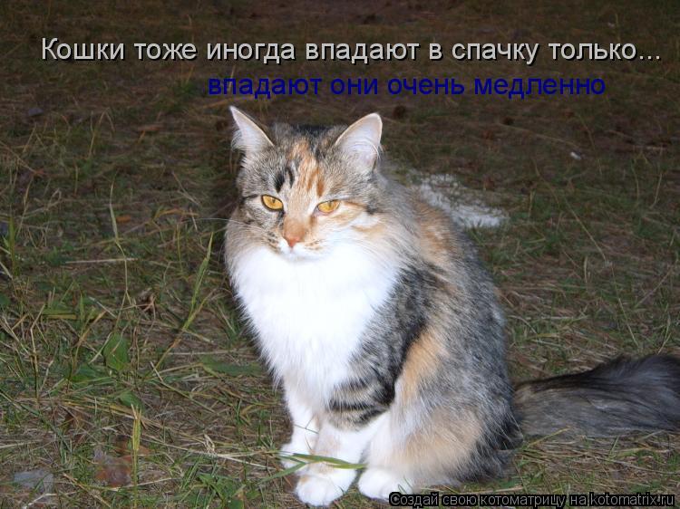 Котоматрица: Кошки тоже иногда впадают в спачку только... впадают они очень медленно