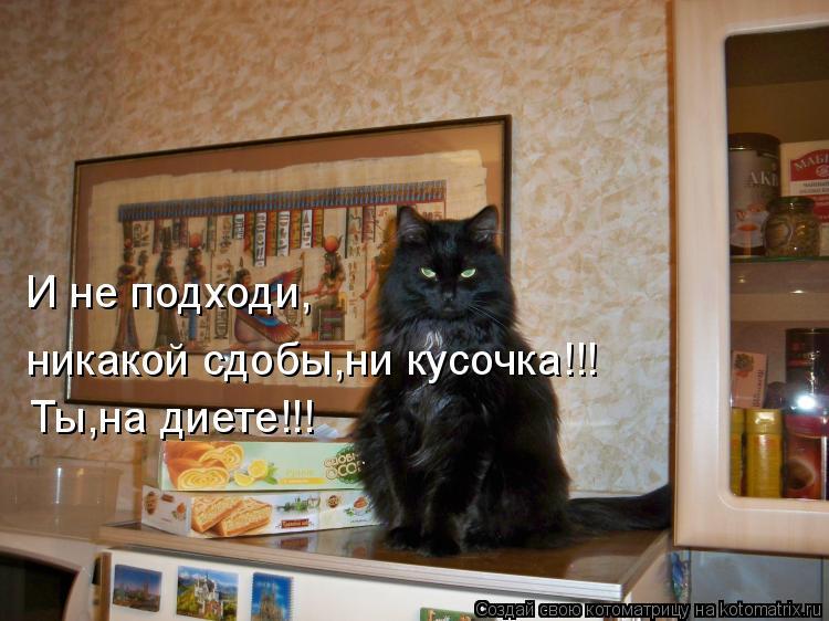 Котоматрица: И не подходи, никакой сдобы,ни кусочка!!! Ты,на диете!!!