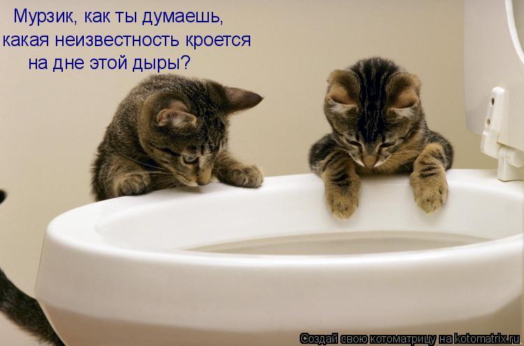 Котоматрица: Мурзик, как ты думаешь, какая неизвестность кроется на дне этой дыры?