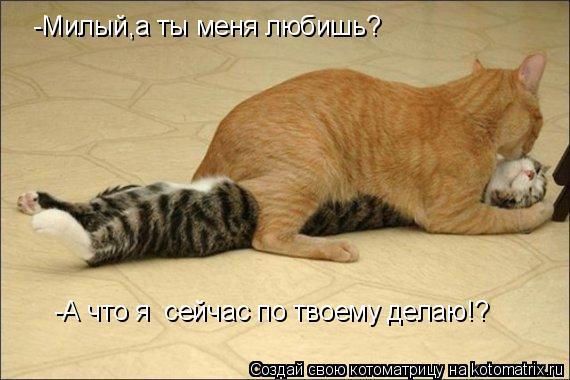 Котоматрица: -Милый,а ты меня любишь? -А что я  сейчас по твоему делаю!?