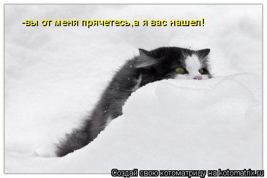 Котоматрица: -вы от меня прячетесь,а я вас нашел!
