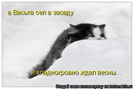 Котоматрица: а Васька сел в засаду и хладнокровно ждал весны...