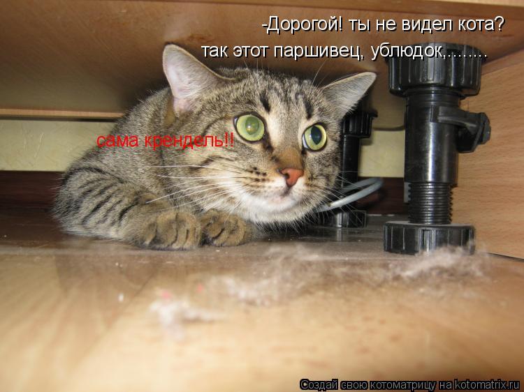 Котоматрица: -Дорогой! ты не видел кота? так этот паршивец, ублюдок,........ сама крендель!!