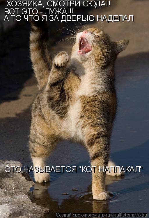 """Котоматрица: ХОЗЯЙКА, СМОТРИ СЮДА!! ВОТ ЭТО - ЛУЖА!!!  А ТО ЧТО Я ЗА ДВЕРЬЮ НАДЕЛАЛ ЭТО НАЗЫВАЕТСЯ """"КОТ НАПЛАКАЛ"""""""
