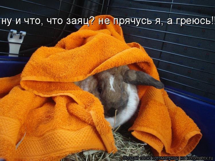 Котоматрица: ну и что, что заяц? не прячусь я, а греюсь!!!