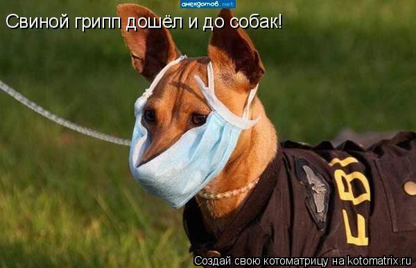 Котоматрица: Свиной грипп дошёл и до собак!