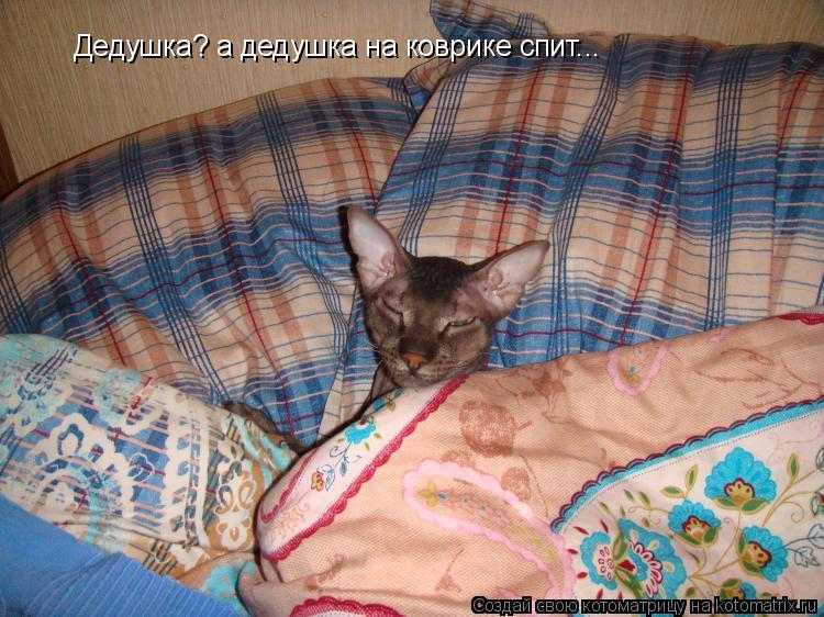 Котоматрица: Дедушка? а дедушка на коврике спит...