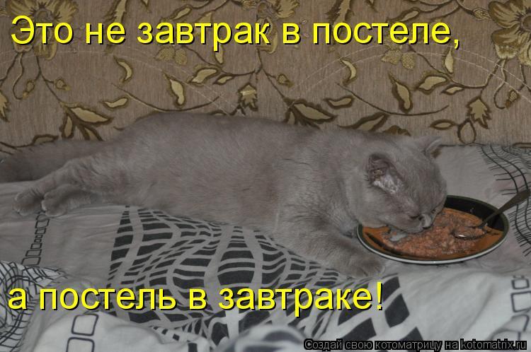 Котоматрица: Это не завтрак в постеле, а постель в завтраке!