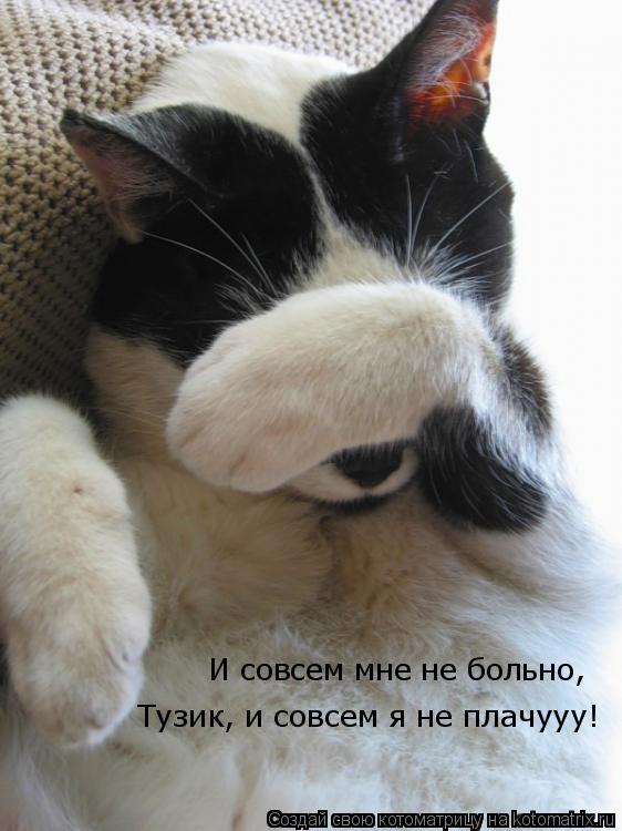 Котоматрица: И совсем мне не больно,  Тузик, и совсем я не плачууу!
