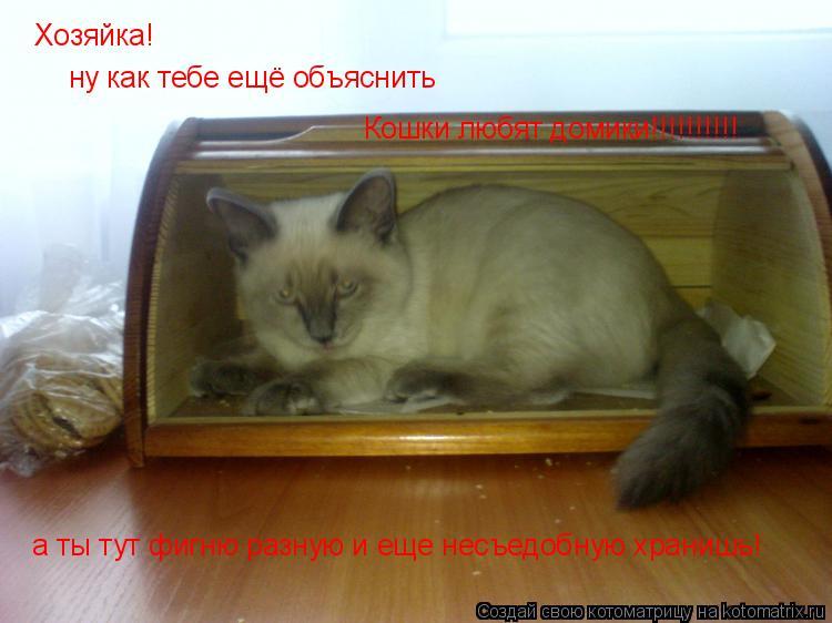 Котоматрица: Хозяйка! ну как тебе ещё объяснить Кошки любят домики!!!!!!!!!! а ты тут фигню разную и еще несъедобную хранишь!