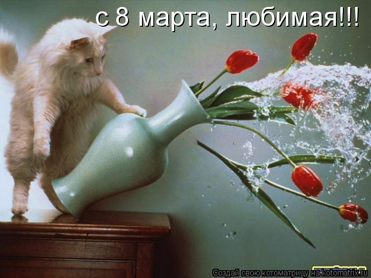Котоматрица: с 8 марта, любимая!!!
