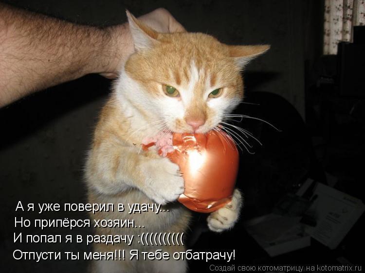Котоматрица: А я уже поверил в удачу... Но припёрся хозяин... И попал я в раздачу :(((((((((( Отпусти ты меня!!! Я тебе отбатрачу!