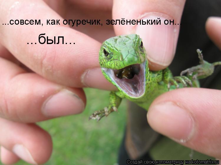 Котоматрица: ...совсем, как огуречик, зелёненький он... ...был...