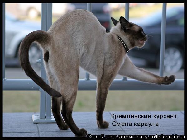Котоматрица: Кремлёвский курсант. Смена караула.