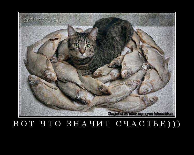Котоматрица: вот что значит счастье)))