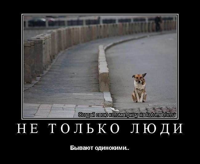 Котоматрица: Не только люди Бывают одинокими..