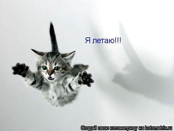 Котоматрица: Я летаю!!!