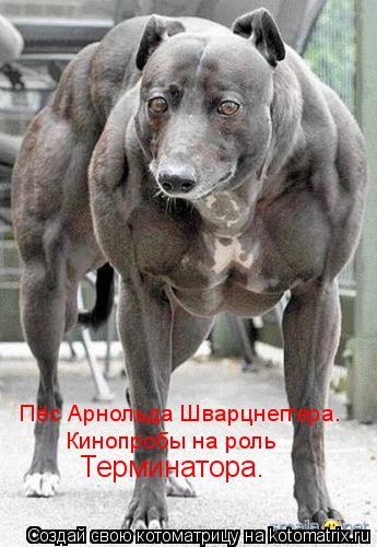 Котоматрица: Пёс Арнольда Шварцнеггера. Кинопробы на роль Терминатора.