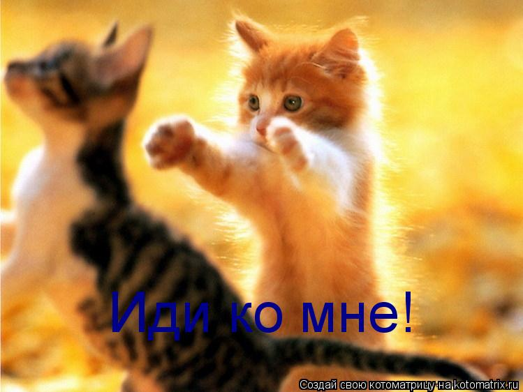 Котоматрица: Иди ко мне!