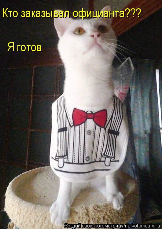 Котоматрица: Кто заказывал официанта??? Я готов