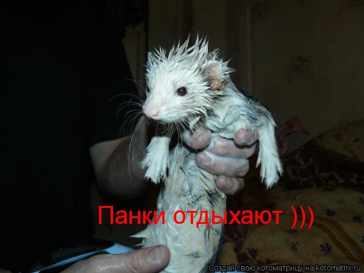 Котоматрица: Панки отдыхают )))