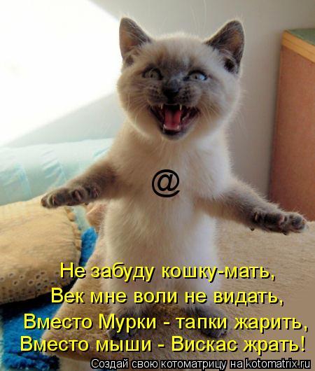 Котоматрица: @ Вместо мыши - Вискас жрать! Вместо Мурки - тапки жарить, Век мне воли не видать, Не забуду кошку-мать,