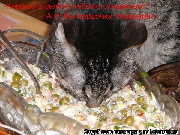 Котоматрица: -Хорошо в салате небыло сухариков!!!  - А то бы мордочку поцарапал