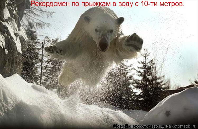 Котоматрица: Рекордсмен по прыжкам в воду с 10-ти метров.